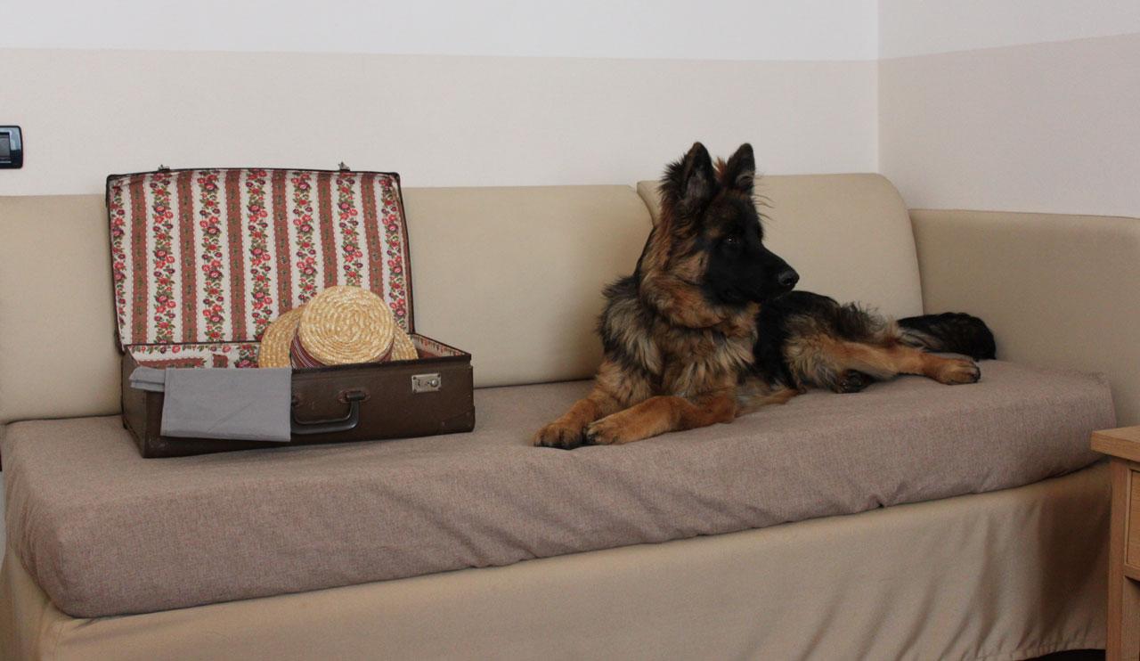 Il Migliore Amico Schio hotel che accetta animali a schio - hotel miramonti