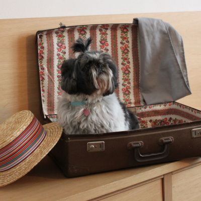 pet-friendly hotel schio animali ammessi 09