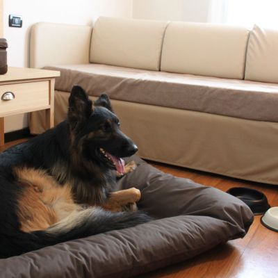 pet-friendly hotel schio animali ammessi 19