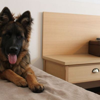 pet-friendly hotel schio animali ammessi 24