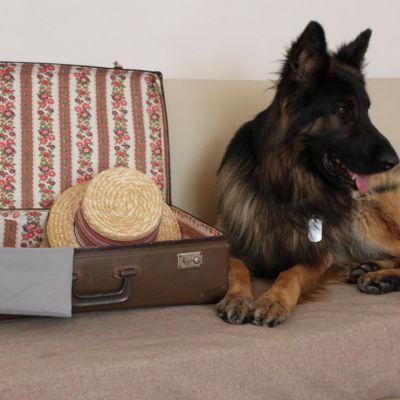 pet-friendly hotel schio animali ammessi 30